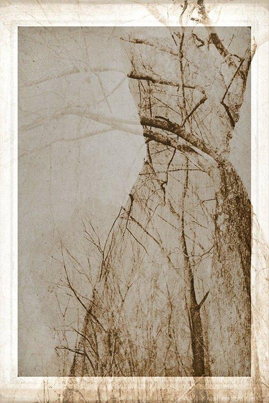 511b Linda Plaisted Skin & Bone.jpg