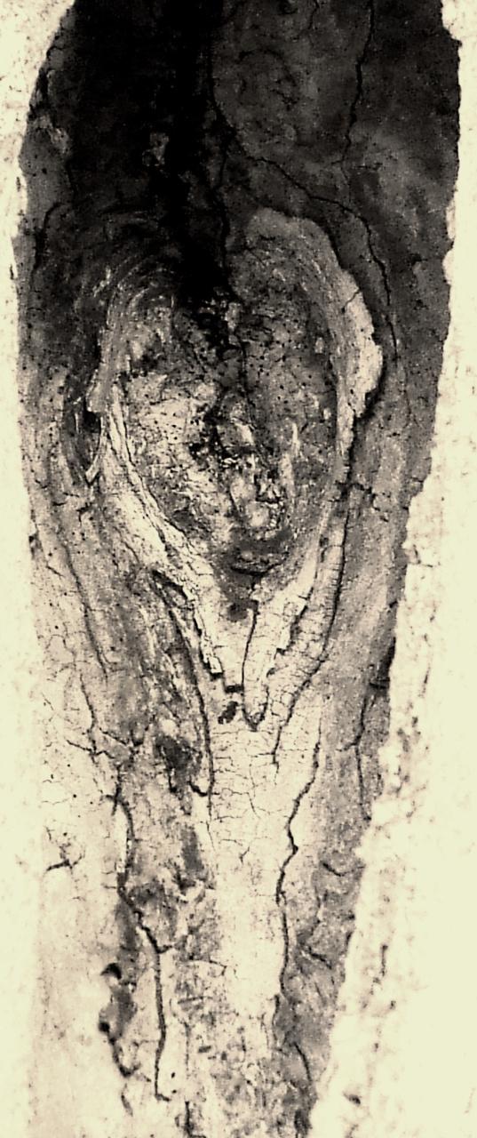 882 Laura J Wellner  The Heart of a Tree, 2011.jpg
