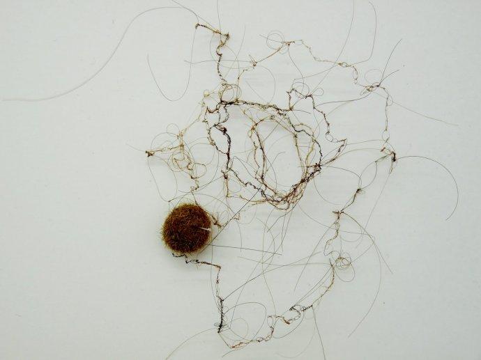 700 Brige Van Egroo dentelles de l'intangible 4 installagtion de cheveux 2010-2013.JPG