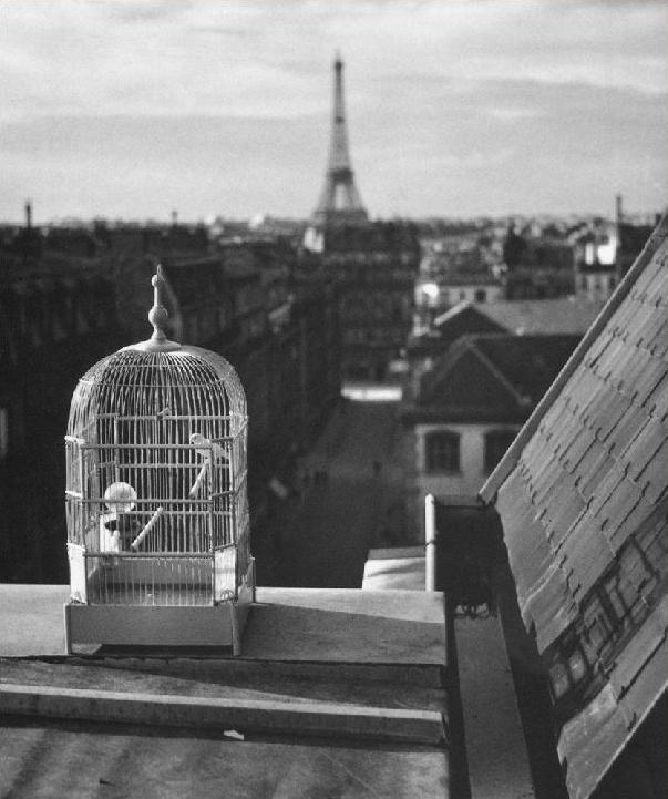 +1087 André Kertész Rue de Vaugirard, Paris, 1931.jpg