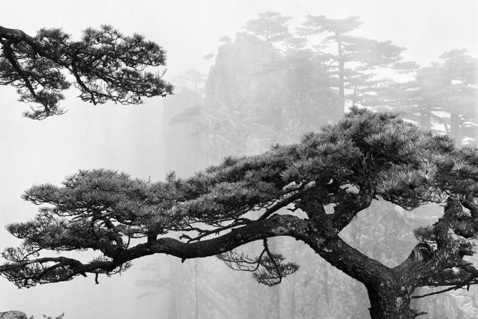+987 Wang Huang Shan-Heart Dragon Pines Overlooking the Peak taken at Now-I-Believe-It Peak in 1975 2.jpg
