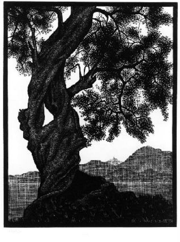 +612 Maurits Cornelis Escher Old Olive Tree c.1920.png